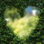 Piękny ,a także ładny ogród to zasługa wielu godzin spędzonych  w jego zaciszu w trakcie jego pielegnacji.